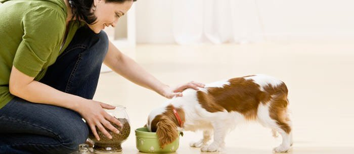 pet-sitter-app-development
